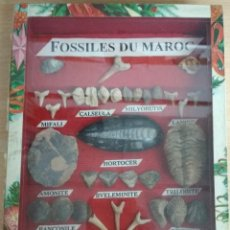 Coleccionismo de fósiles: FOSILES DE MARRUECOS. FOSSILES DU MAROC.CAJA CON 48 UNIDADES VARIADAS.. Lote 215695608