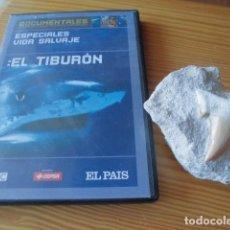 Coleccionismo de fósiles: DIENTE DE TIBURÓN GRANDE FOSILIZADO Y DVD TIBURONES, NO MEGALODÓN. Lote 216923263
