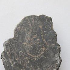Coleccionismo de fósiles: TRONCO FÓSIL DEL PERIODO JURÁSICO, ASTURIAS. Lote 218806498