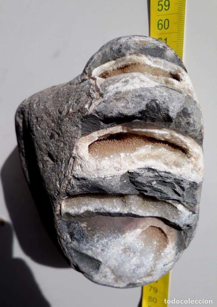 Coleccionismo de fósiles: RARO FÓSIL. PETRIFICADO, CRISTALIZADO. CRETÁCICO. OBSERVEN TODAS LAS FOTOS. MINERALES. - Foto 2 - 223377246