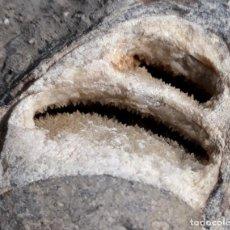 Coleccionismo de fósiles: RARO FÓSIL. PETRIFICADO, CRISTALIZADO. CRETÁCICO. OBSERVEN TODAS LAS FOTOS. MINERALES.. Lote 223377246