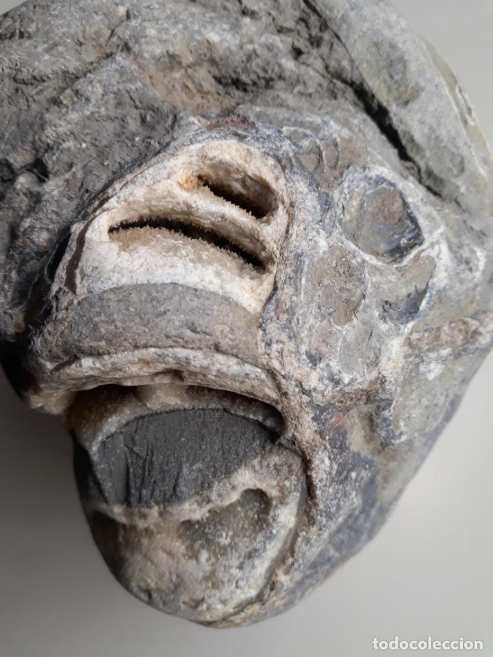Coleccionismo de fósiles: RARO FÓSIL. PETRIFICADO, CRISTALIZADO. CRETÁCICO. OBSERVEN TODAS LAS FOTOS. MINERALES. - Foto 7 - 223377246