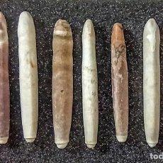 Coleccionismo de fósiles: RADIOLAS DE CIDAROIREOS DEL MIOCENO TORTONIENSE. Lote 224996025