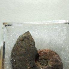 Coleccionismo de fósiles: AMMONITES FOSIL PSEUDOLIOCERAS BICARINATUS. JURÁSICO. FRANCIA.. Lote 253072660