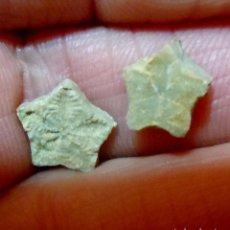 Collezionismo di fossili: CRINOIDEOS-CHLADOCRINUS BASALTIFORMIS-JURÁSICO-LA TOUR SUR ORB-FRANCIA N-606. Lote 233863830