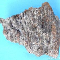 Collectionnisme de fossiles: 1 - EXCEPCIONAL FÓSIL DE CORTEZA DE ÁRBOL DEL JURÁSICO DEL LEVANTE ESPAÑOL MINERALES - MINERAL.. Lote 252507685