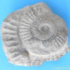 Coleccionismo de fósiles: FOSIL DE AMONITES DEL JURÁSICO, BIOZONA KIMERIDGIENSE. LEVANTE. - MINERAL. Lote 234807825