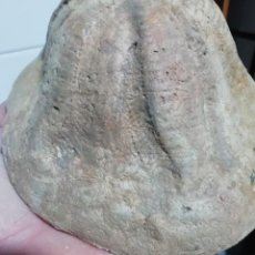 Coleccionismo de fósiles: ERIZO FÓSIL CLYPEASTER PORTENTOSUS. Lote 237000200