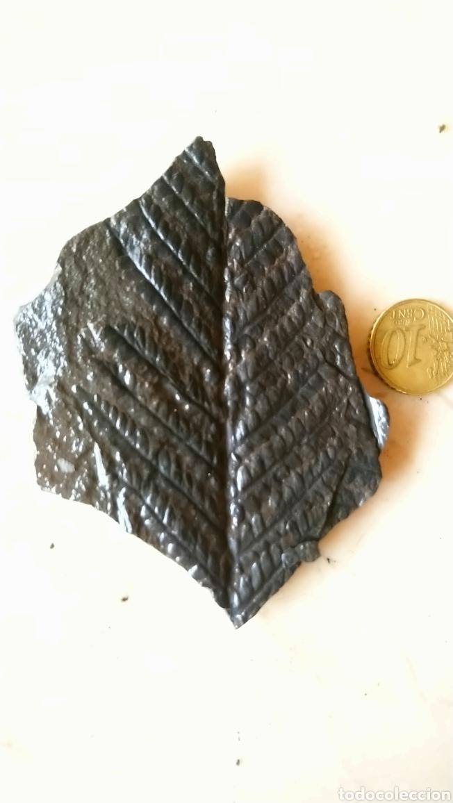 Coleccionismo de fósiles: Lote de 4 bonitos fósil, helechos, gramíneas...en pizarra - Foto 2 - 237099650