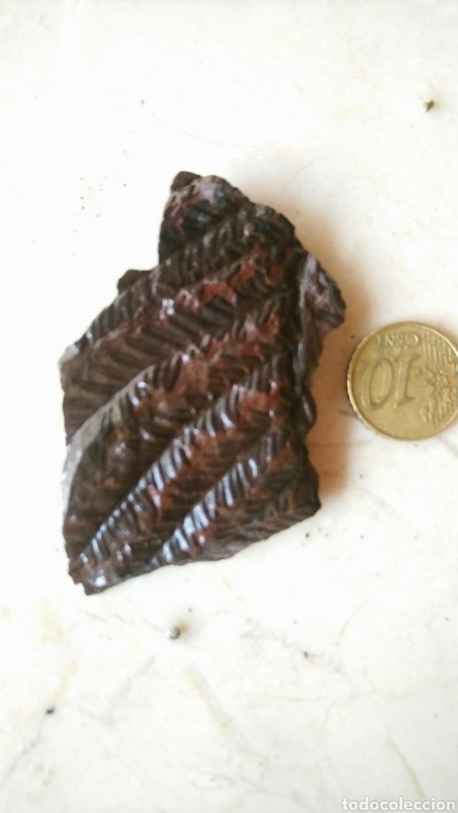 Coleccionismo de fósiles: Lote de 4 bonitos fósil, helechos, gramíneas...en pizarra - Foto 3 - 237099650