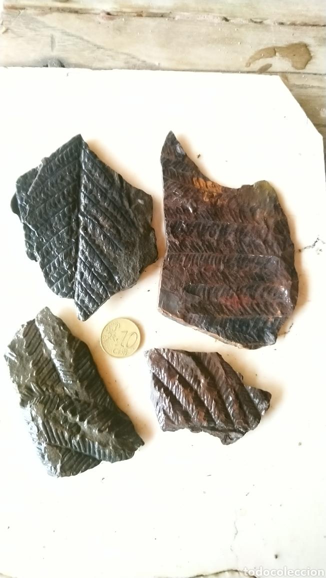 LOTE DE 4 BONITOS FÓSIL, HELECHOS, GRAMÍNEAS...EN PIZARRA (Coleccionismo - Fósiles)