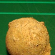 Colecionismo de fósseis: ECHINOSPHAERITES AURATIUM. ORDOVICICO. ESTONIA. Lote 237724145