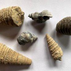 Coleccionismo de fósiles: 6 FOSILES MARINOS DE LA COMARCA DEL BERGUEDÀ. Lote 238300665