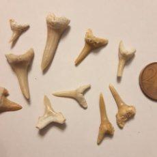 Coleccionismo de fósiles: LOTE 2. 10 PEQUEÑOS DIENTES DE TIBURÓN. Lote 240128920