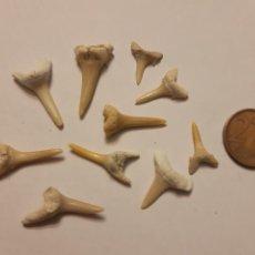 Coleccionismo de fósiles: LOTE 4. 10 PEQUEÑOS DIENTES DE TIBURÓN. Lote 240129120