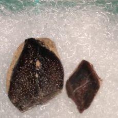 Coleccionismo de fósiles: ESCAMAS DE PEZ FOSIL LEPIDISTEUS SUSSIONENSIS. EOCENO. FRANCIA.. Lote 246548195