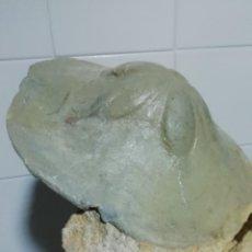 Coleccionismo de fósiles: CLYPEASTER MARGINATUM. Lote 248271515