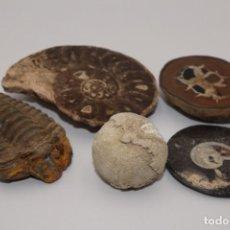 Coleccionismo de fósiles: FOSILES LOTE N4 DE 5 FOSILES. Lote 253896200