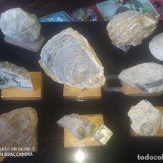 Coleccionismo de fósiles: COLECCIÓN DE MINERALES Y FÓSILES 11 PZS. Lote 254792755