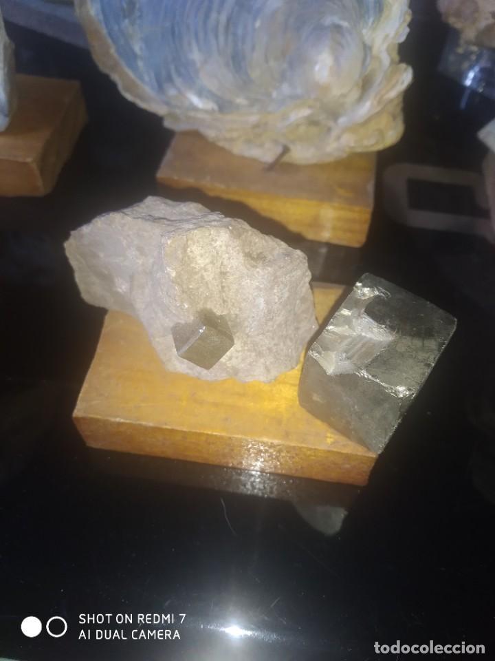 Coleccionismo de fósiles: Colección de minerales y fósiles 11 pzs - Foto 3 - 254792755