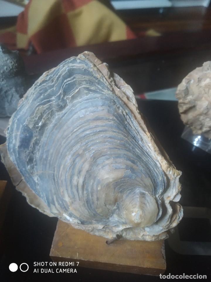 Coleccionismo de fósiles: Colección de minerales y fósiles 11 pzs - Foto 5 - 254792755