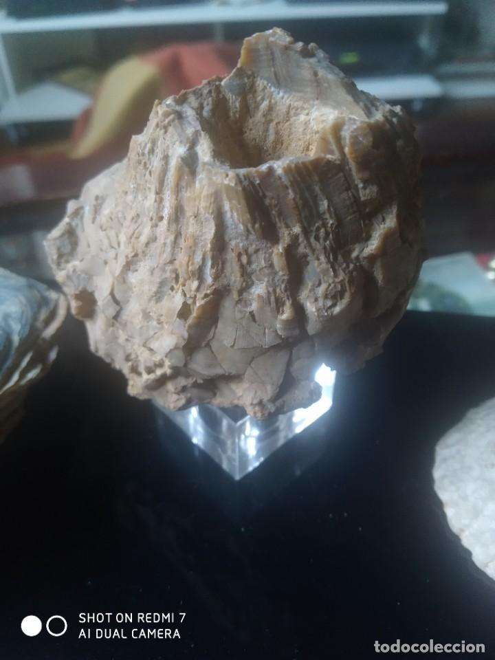 Coleccionismo de fósiles: Colección de minerales y fósiles 11 pzs - Foto 8 - 254792755