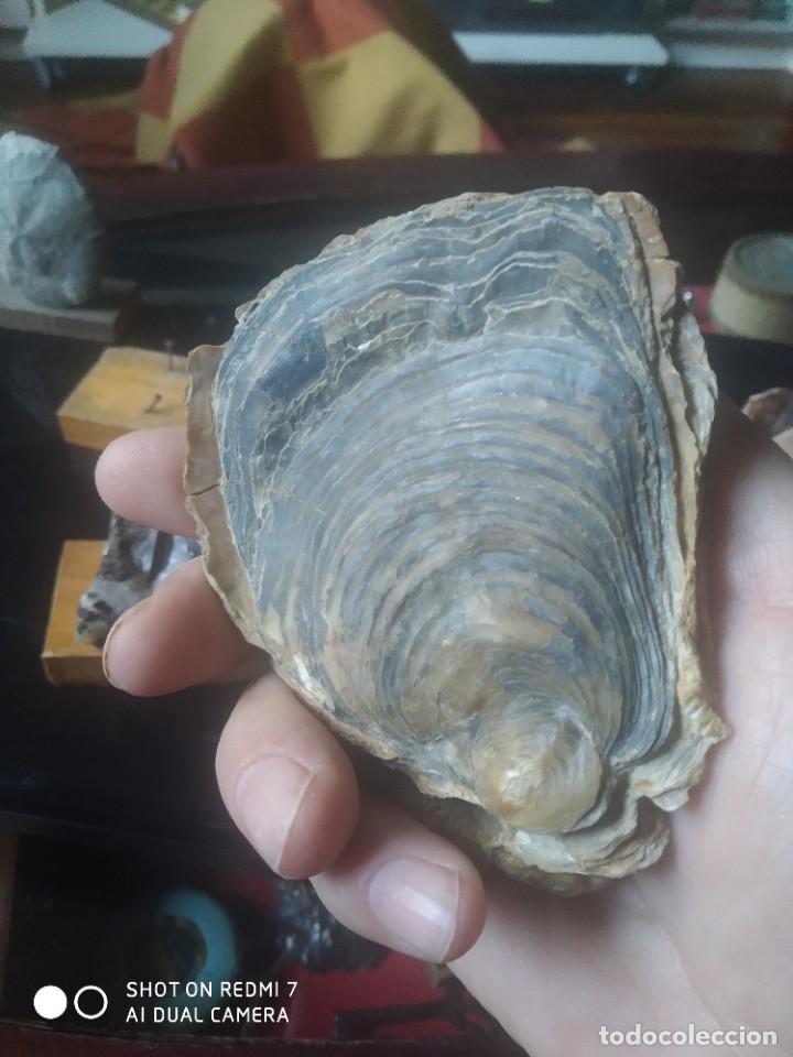 Coleccionismo de fósiles: Colección de minerales y fósiles 11 pzs - Foto 10 - 254792755