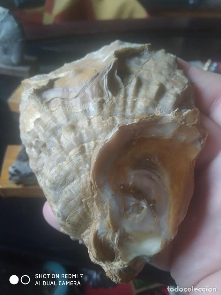 Coleccionismo de fósiles: Colección de minerales y fósiles 11 pzs - Foto 11 - 254792755