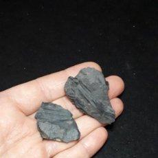 Coleccionismo de fósiles: FOSIL- PLANTAS RESTOS VEGETALES - CARBONIFERO. Lote 219600810