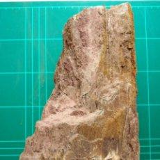 Coleccionismo de fósiles: TRONCO FOSIL XILOPALO. CRETACICO. EUROPA.. Lote 258312150