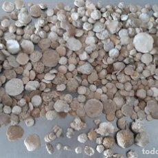 Coleccionismo de fósiles: GRAN LOTE FÓSIL FOSSIL NUMMULITE TIPO AMMONITE PROTOZOO CENOZOICO EOCENO CORAL ERIZO CARACOLA GUSANO. Lote 262368145
