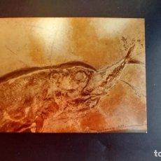 Coleccionismo de fósiles: LOTE AB. POSTAL CATURUS MUSEUM BERGER HARTHOF EICHSTATT. Lote 262450470