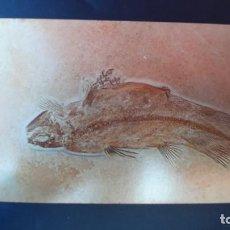 Coleccionismo de fósiles: LOTE AB. POSTAL UNDINA MUSEUM BERGER HARTHOF EICHSTATT. Lote 262451390