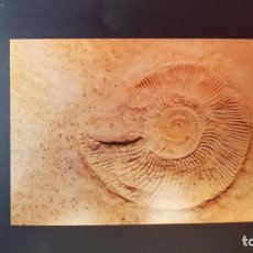 Coleccionismo de fósiles: LOTE AB. POSTAL AMONITE MUSEUM BERGER HARTHOF EICHSTATT. Lote 262452295
