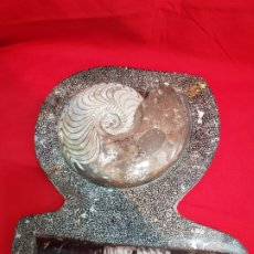 Coleccionismo de fósiles: CONJUNTO FÓSILES PULIDOS GRAN TAMAÑO. Lote 262725705