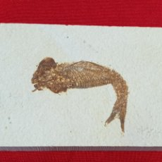 Coleccionismo de fósiles: PLACA PEZ FOSIL. Lote 262753510