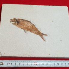Coleccionismo de fósiles: PLACA PEZ FOSIL. Lote 262754275