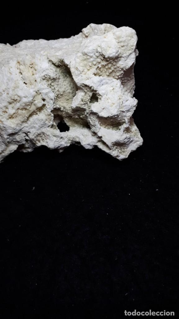 Coleccionismo de fósiles: Fosil- coral fosil Acropora - Mioceno - Foto 3 - 211921877