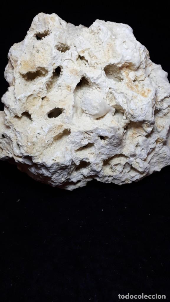 Coleccionismo de fósiles: Fosil- coral fosil Acropora - Mioceno - Foto 3 - 211922097