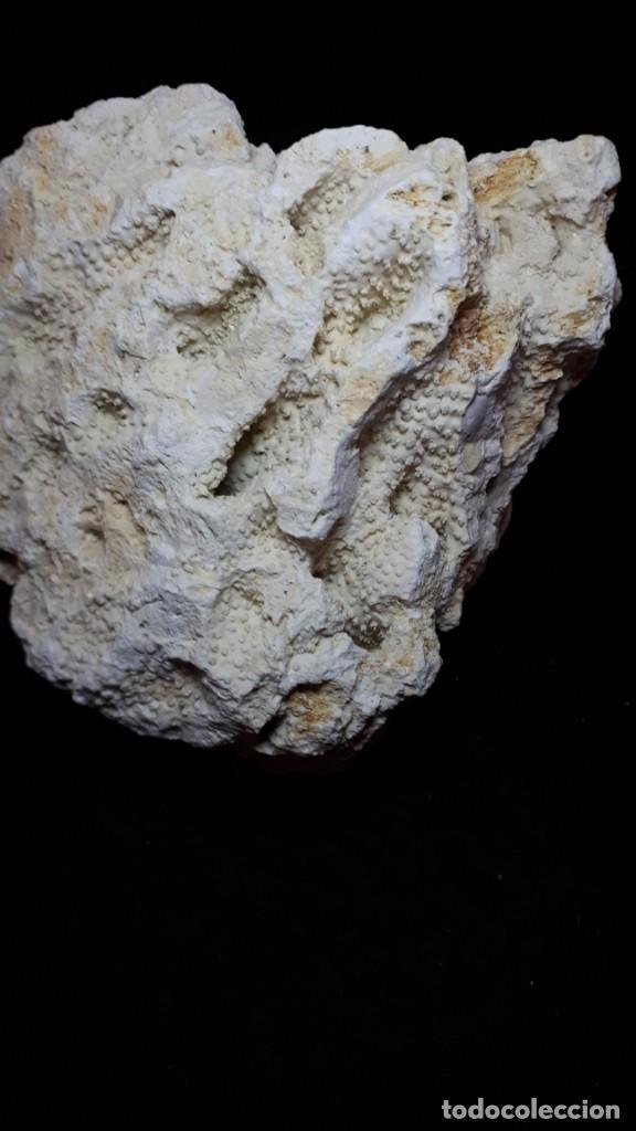 Coleccionismo de fósiles: Fosil- coral fosil Acropora - Mioceno - Foto 8 - 211922097