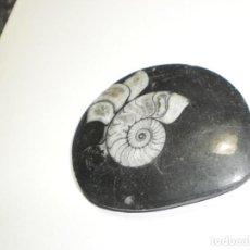 Coleccionismo de fósiles: FÓSIL DE 8 CM DE DIÁMETRO X 6,5 CM X 1 CM DE GROSOR (BUEN ESTADO). Lote 268116714
