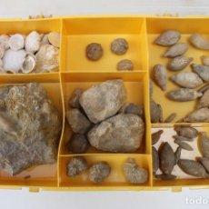 Coleccionismo de fósiles: LOTE DE FÓSILES - CAJA INCLUIDA. Lote 268826564