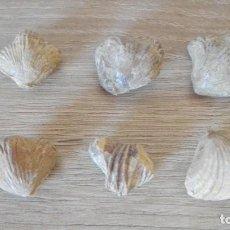 Coleccionismo de fósiles: CONJUNTO SEIS FÓSILES BIBALVOS.. Lote 270359568