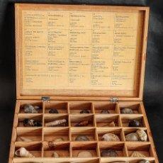 Coleccionismo de fósiles: ANTIGUA CAJA DE MADERA DE COLECCIÓN CON 24 FÓSILES. Lote 272639313
