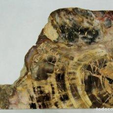 Coleccionismo de fósiles: XILÓPALO, MADERA FÓSIL (TRIÁSICO ARGENTINO). BLOQUE CORTADO DE UN TRONCO. Lote 275047458