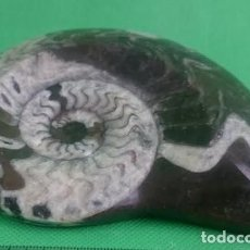 Coleccionismo de fósiles: GONIATITES.(DEVÓNICO). 400 MILLONES DE AÑOS. VALLE DEL ZIZ. MARRUECOS. 120X90X20. Lote 275050923