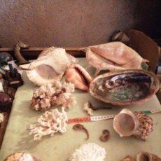 Coleccionismo de fósiles: GRAN LOTE DE FÓSILES - CORALES Y OTROS. Lote 277189138