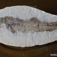 Coleccionismo de fósiles: PEZ FÓSIL,THARRIAS ARARIPIS,CRETÁCEO INFERIOR, 250 MM.. Lote 283079403