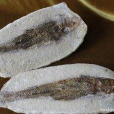 Coleccionismo de fósiles: PEZ FOSIL THARRIAS ARAPIPIS,CRETÁCEO INFERIOR, 280 MM DE LONGITUD (DOS PIEZAS, POSITIVO Y NEGATIVO).. Lote 283091963