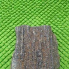 Coleccionismo de fósiles: MADERA FOSIL. Lote 285185253